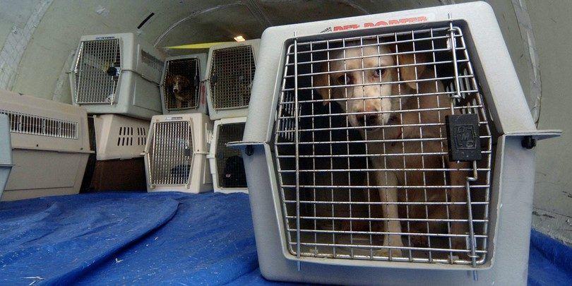 Los perros en avión