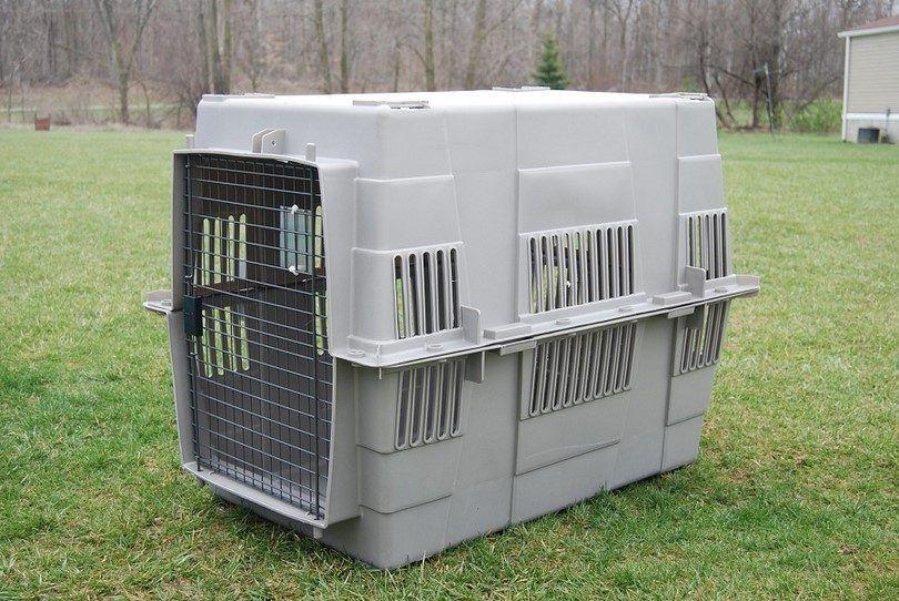 cajón del perro para el transporte