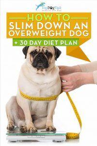 Cómo bajar de peso de un perro con sobrepeso