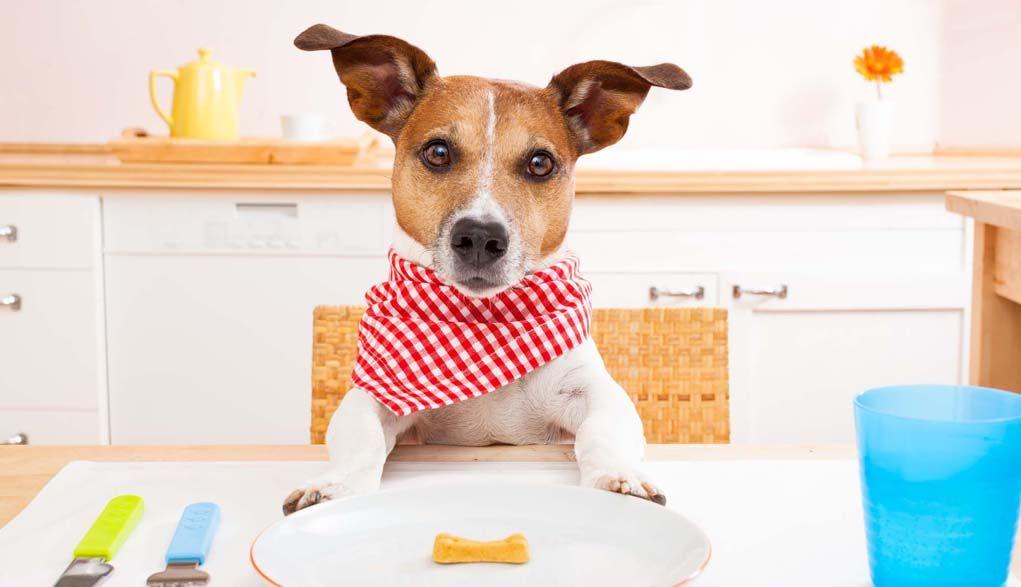 Cómo bajar de peso de un perro de sobrepeso y la grasa Perros