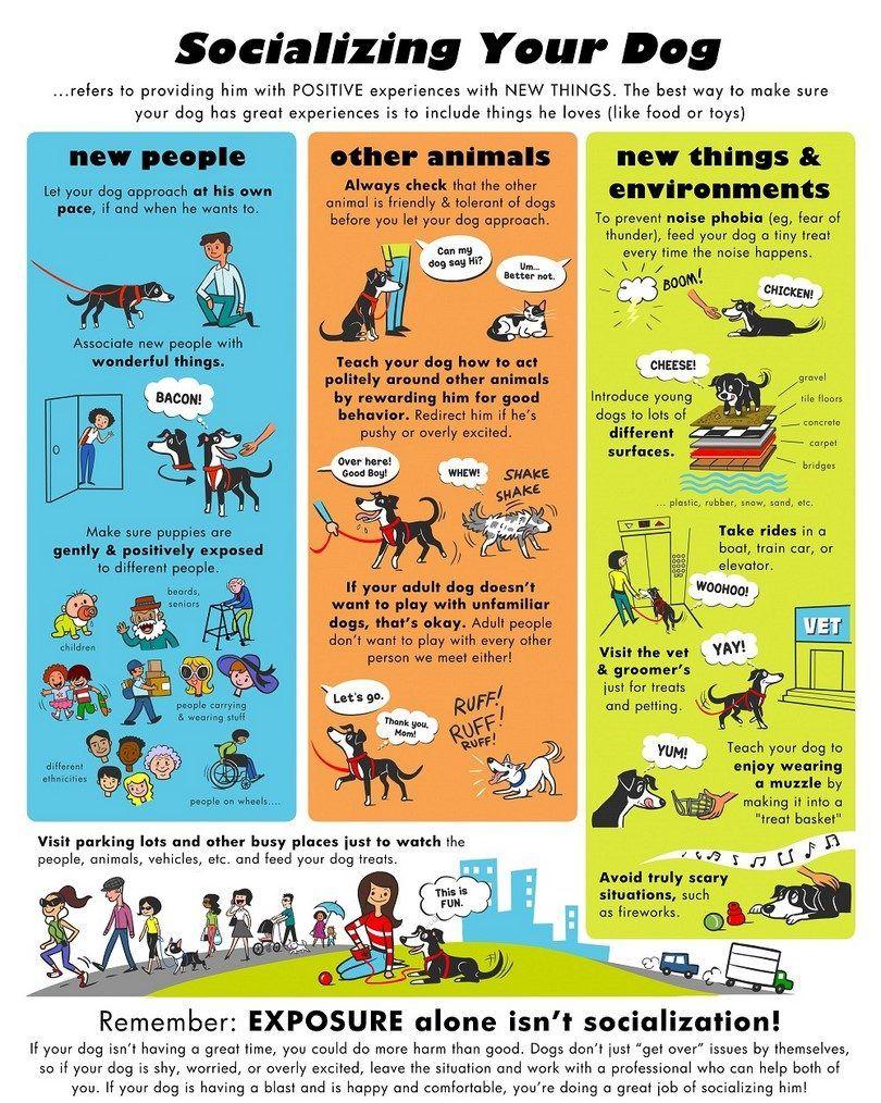 La socialización de su perro infografía