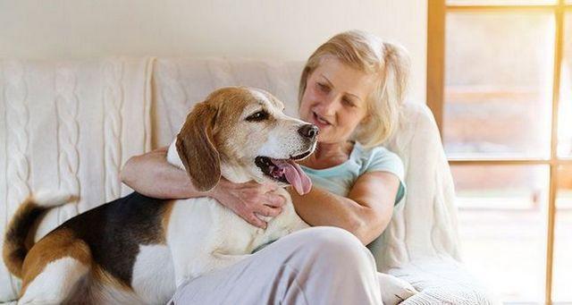 Cómo socializar a un perro sobreprotector