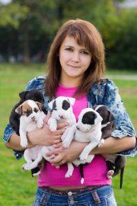 Consideraciones preliminares antes de iniciar un negocio de crГa de perros