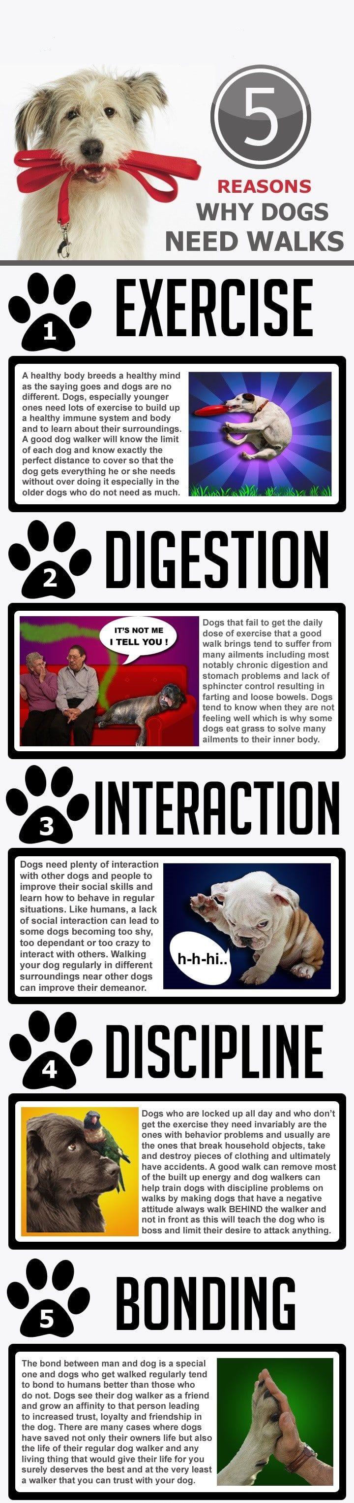 Datos y beneficios para pasear al perro