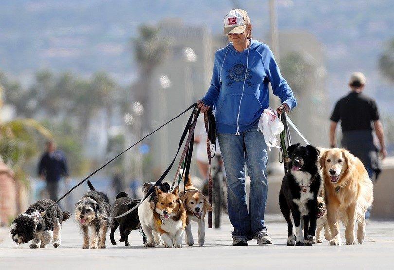 caminante del perro con la agencia
