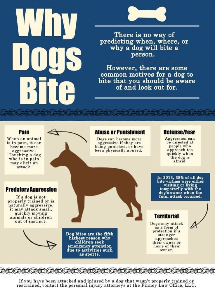 ¿Por qué los perros muerden