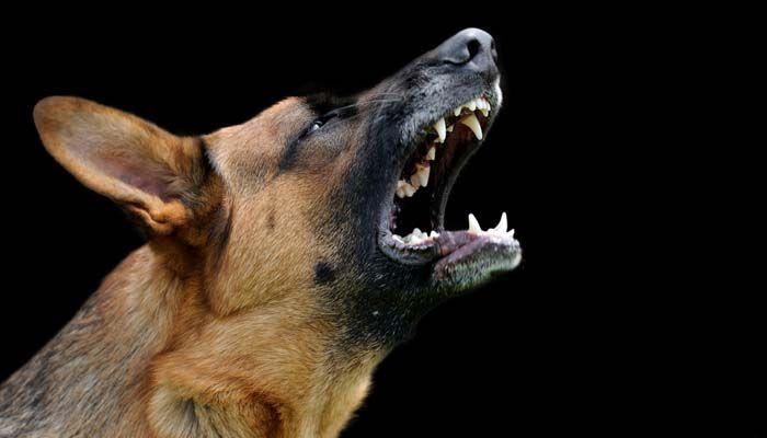 Entrenamiento del perro de parada Barking