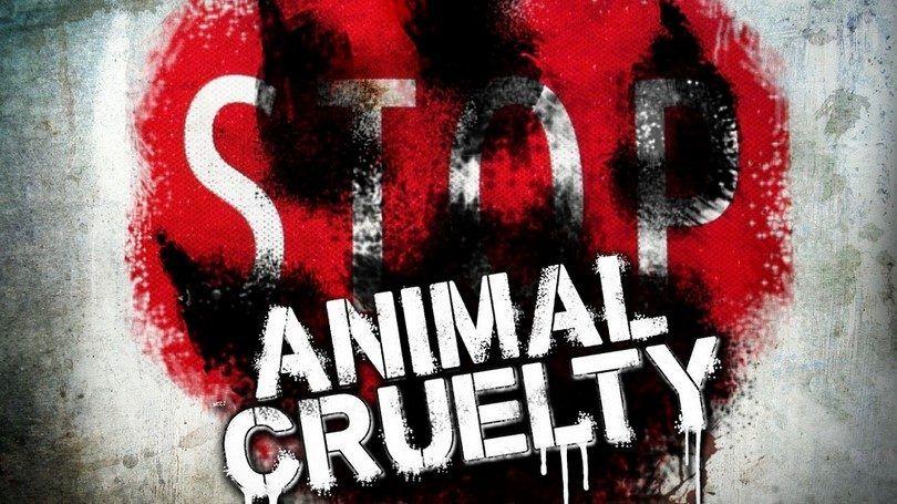Pare el abuso animal