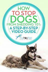 Cómo dejar de perro Arrojando