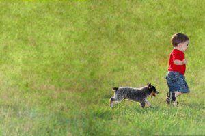niño con el perrito heeler azul