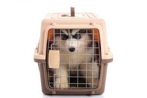 el tamaño correcto de una caja de perro o de una casa de perro