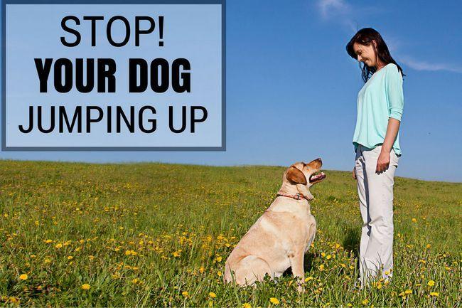 ¿Cómo parar su perro o cachorro de saltar