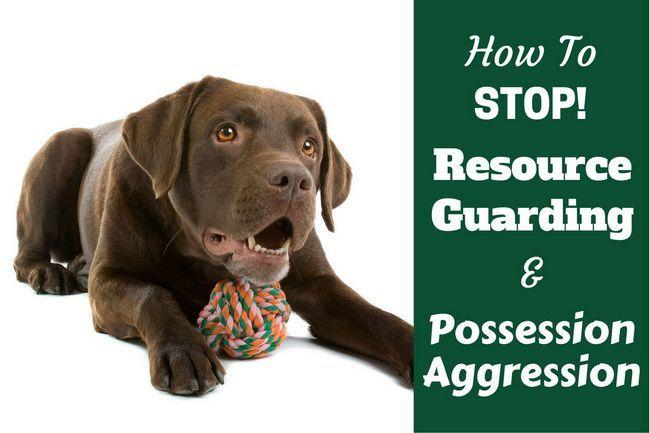 ¿Cómo parar su recurso labrador que guarda los alimentos y las posesiones