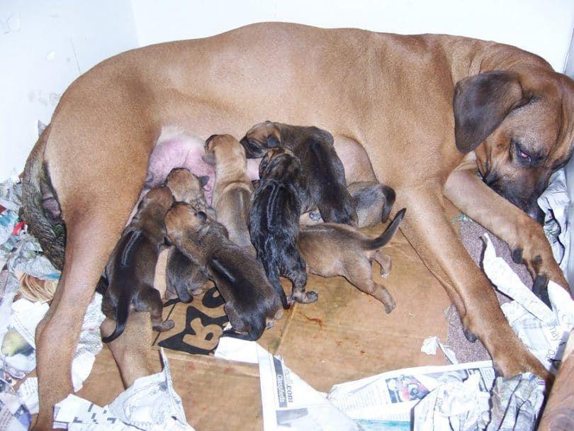 Perritos con la madre