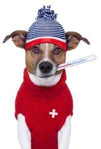 Los signos de fiebre en los perros