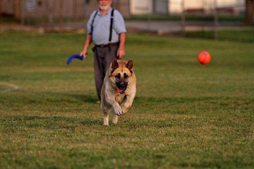 Cómo enseñar a un perro a buscar: un ejercicio de lealtad y de la alegría