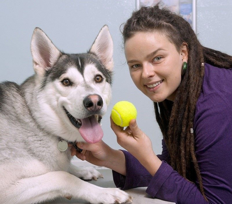 Husky quiere jugar a la pelota