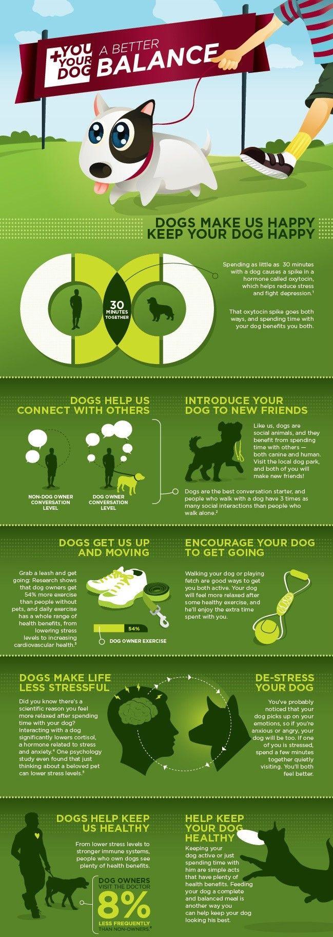 Mantenga a su perro feliz