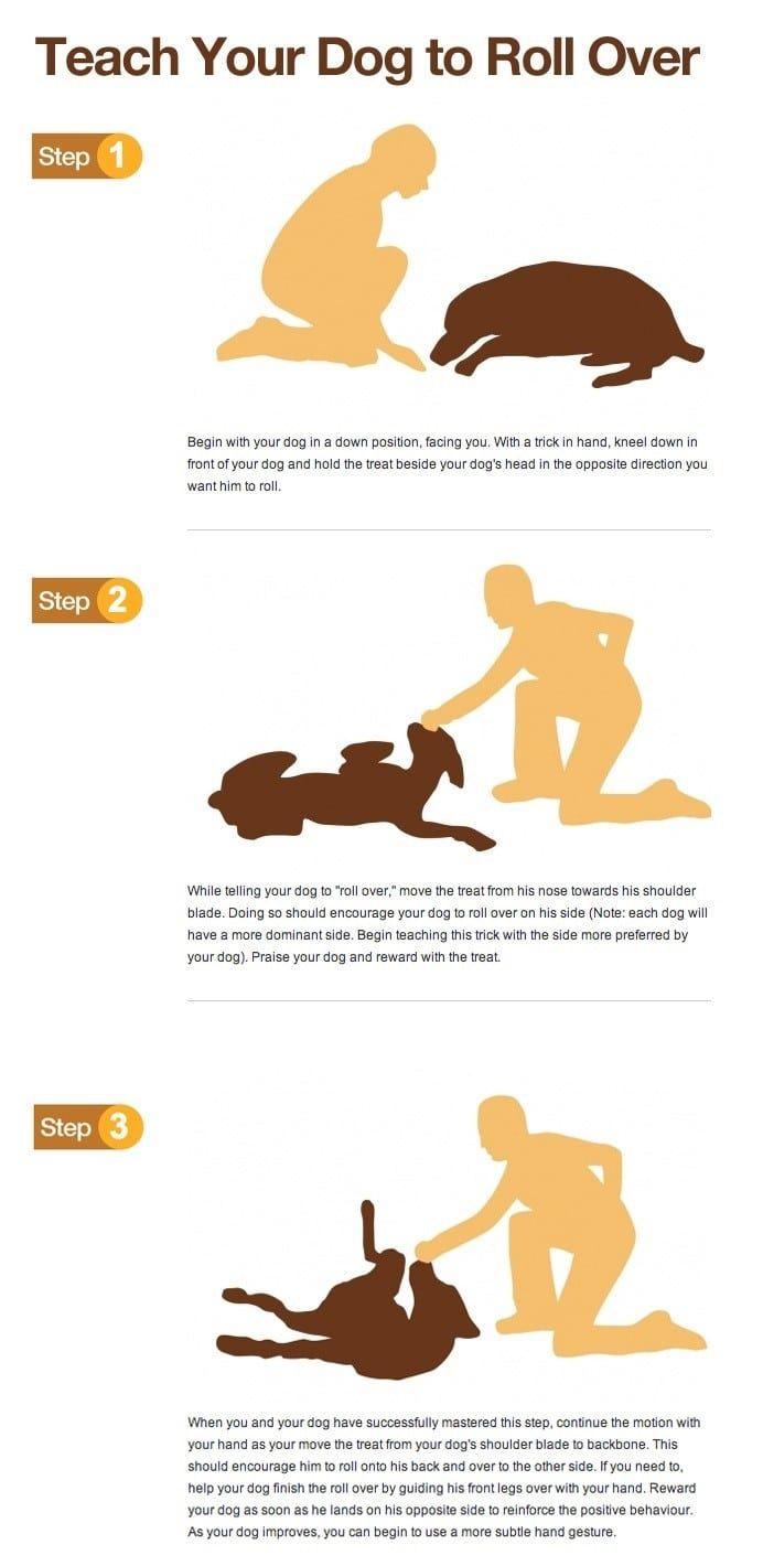 Enseñar a su perro a rodar sobre infografía