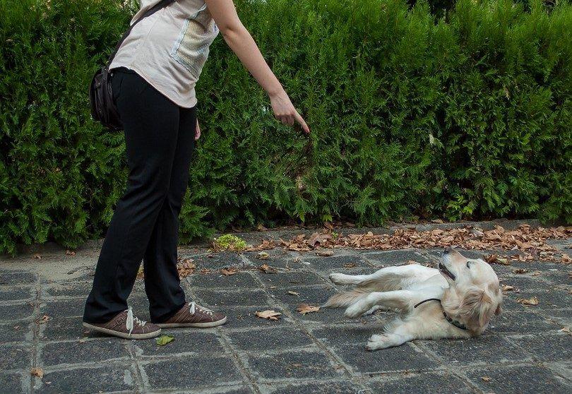 Entrenar a sus trucos a un perro