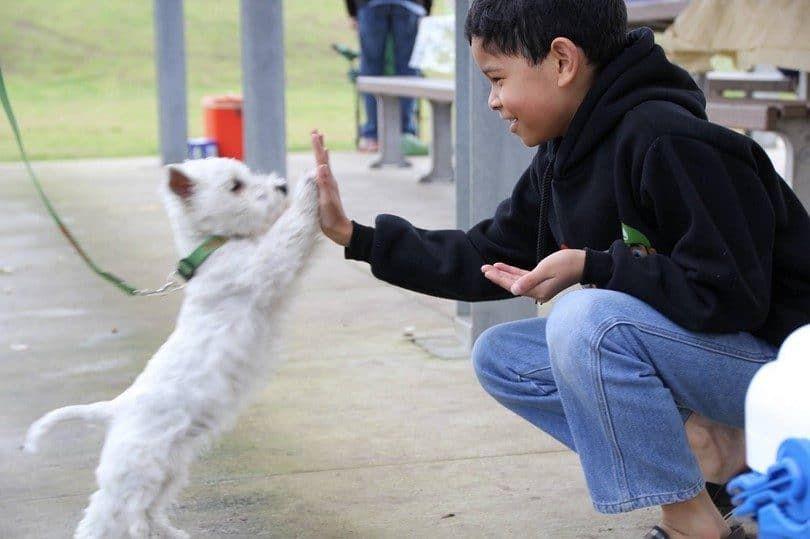 Máximo de cinco con un perro
