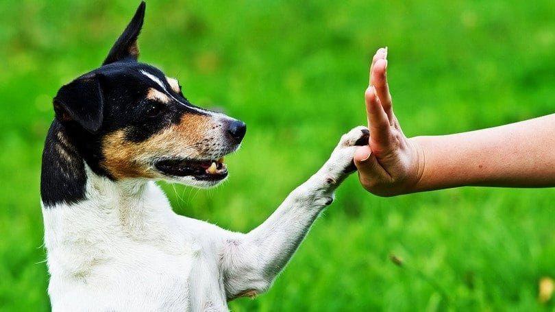 Máximo de cinco con el perro