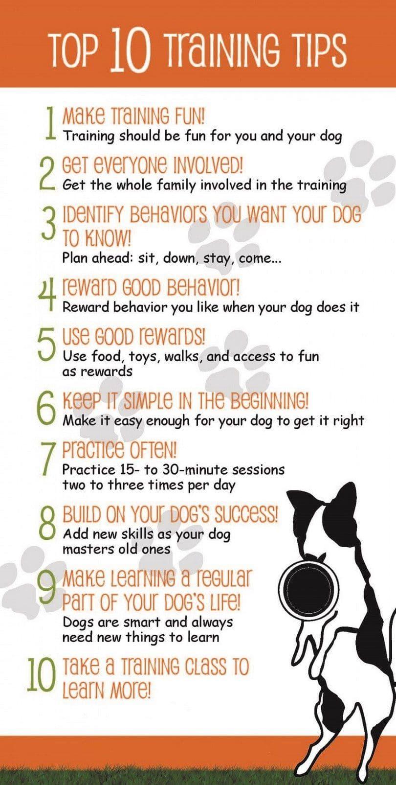 Las diez mejores consejos sobre el entrenamiento del perro