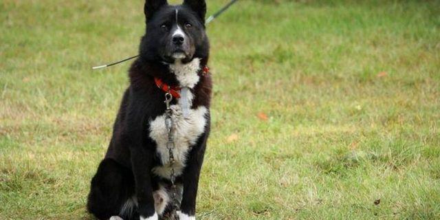 Cómo enseñar a un perro a sentarse (y mantenerse)