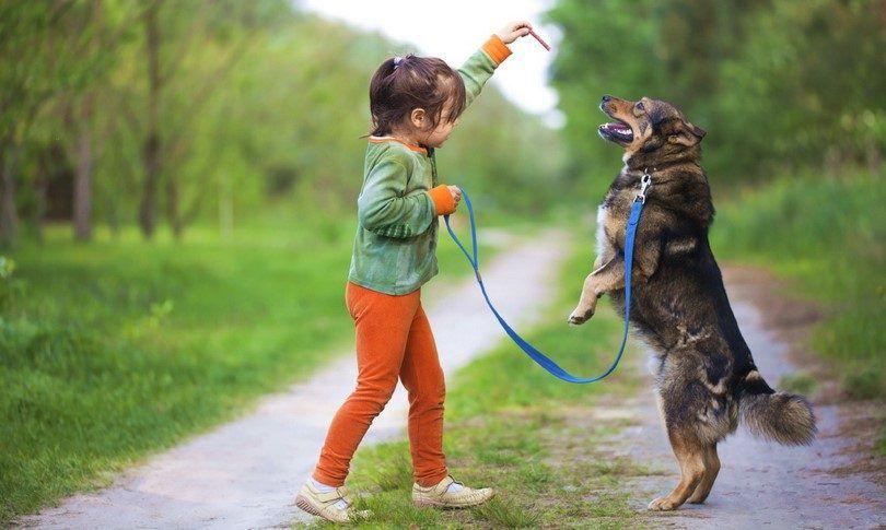 Cómo enseñar a un perro a permanecer, se siente o se venga cuando se le preguntó: conceptos básicos de formación la obediencia del perro