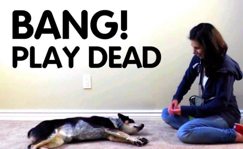 Enseñar a su perro a Play Dead