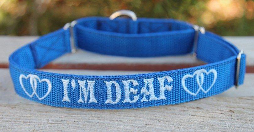 collar de perro sordo