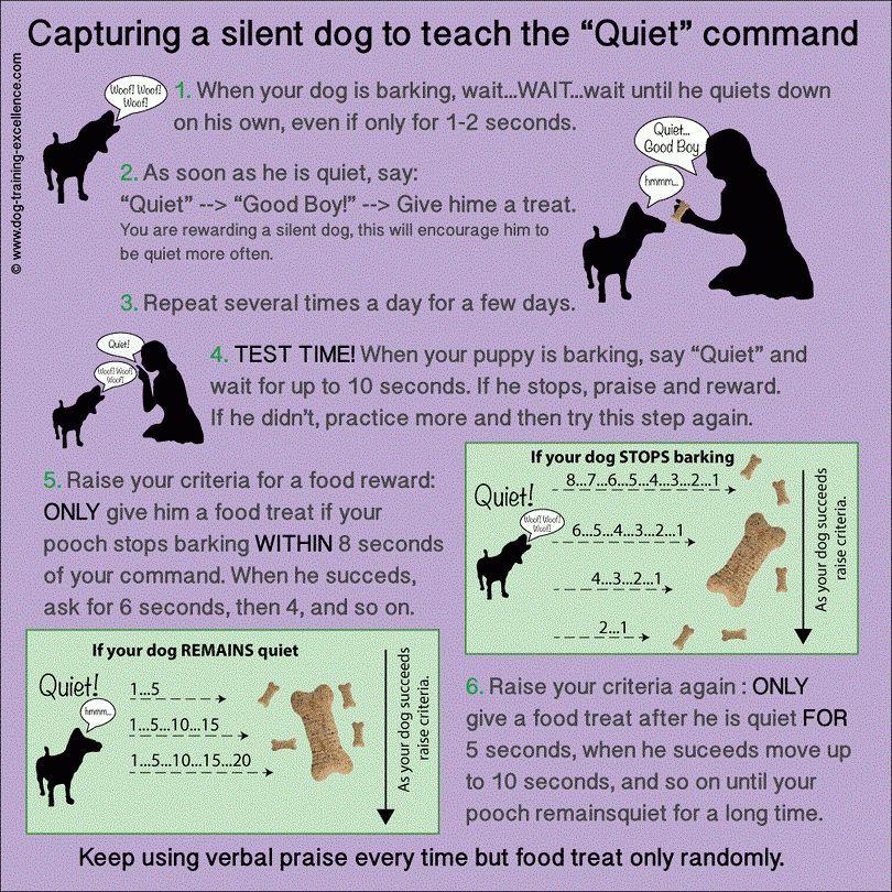 Cómo entrenar a un perro para que no ladre: métodos principales que van a trabajar