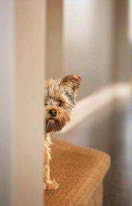 Perro asustado de aseo