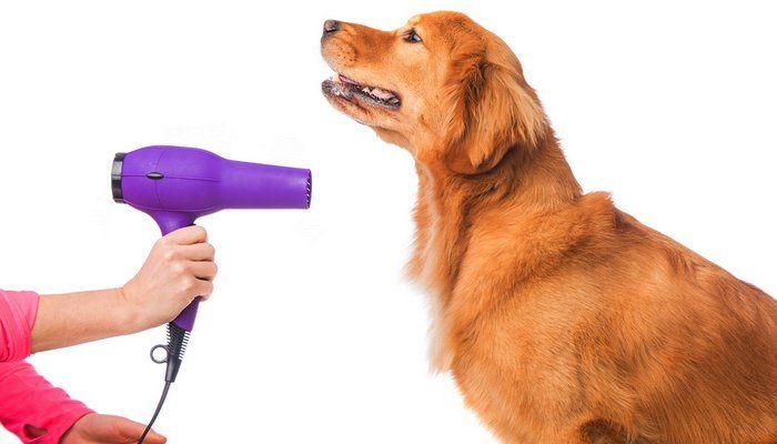 Cómo entrenar a un perro a disfrutar de la preparación