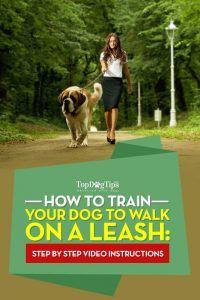 CГіmo entrenar a un perro a caminar con una correa