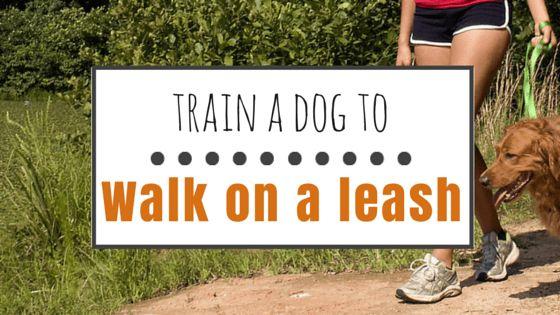 Cómo entrenar a un perro a caminar con una correa