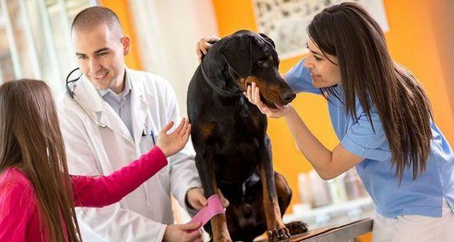 Cómo tratar cortes en los perros