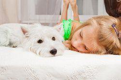 Cómo tratar los vómitos cachorro