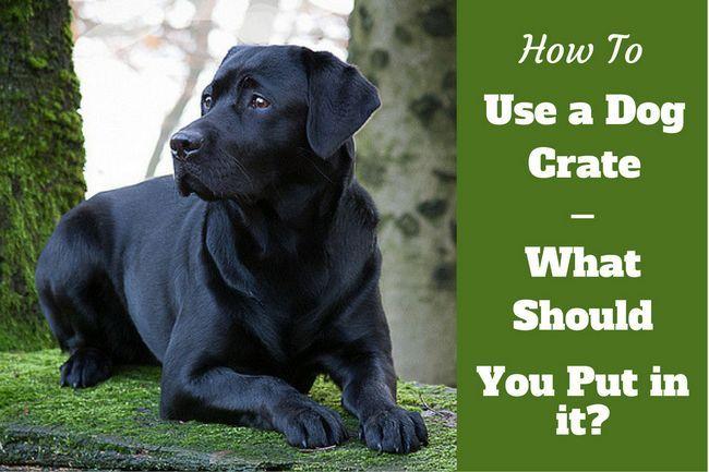 Cómo utilizar una caja de perro - Labrador Negro por el que se
