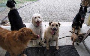CГіmo escribir un plan de negocios Embarque de perros