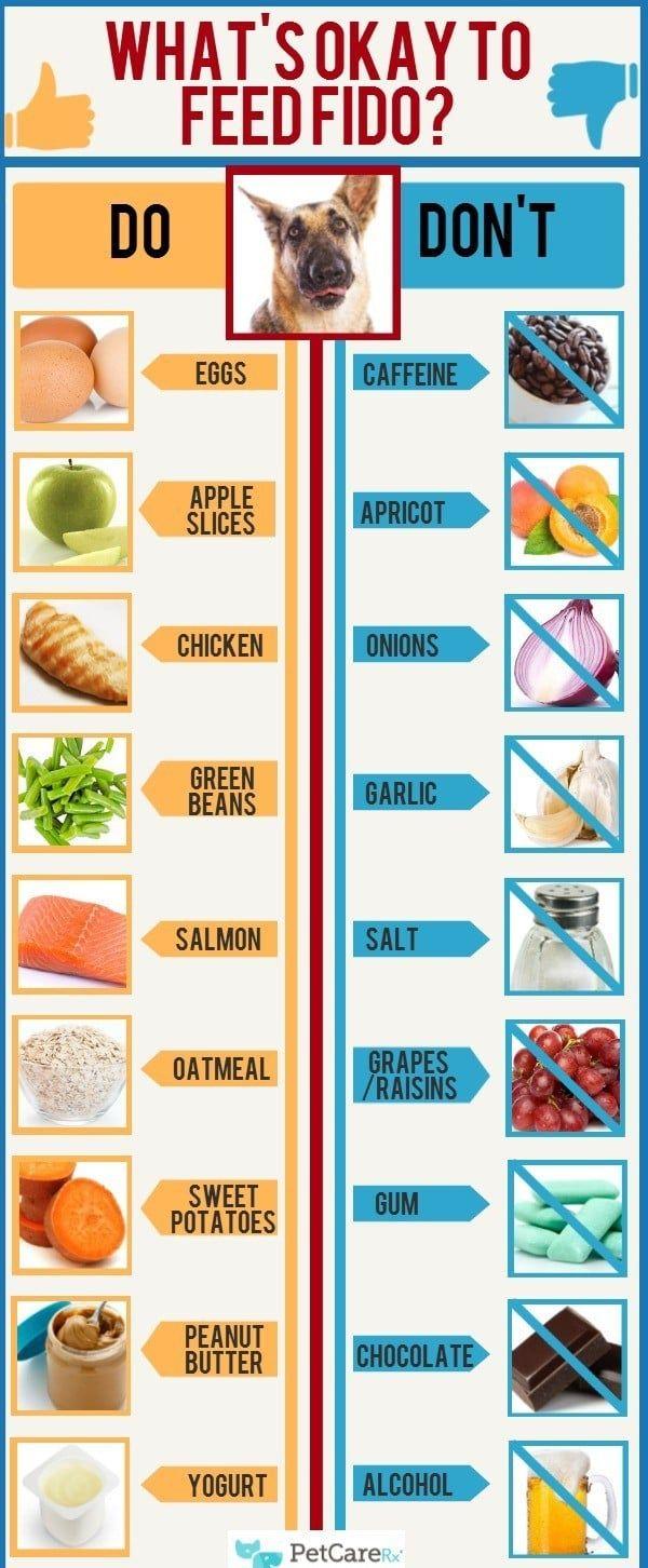 infografía comida para perros