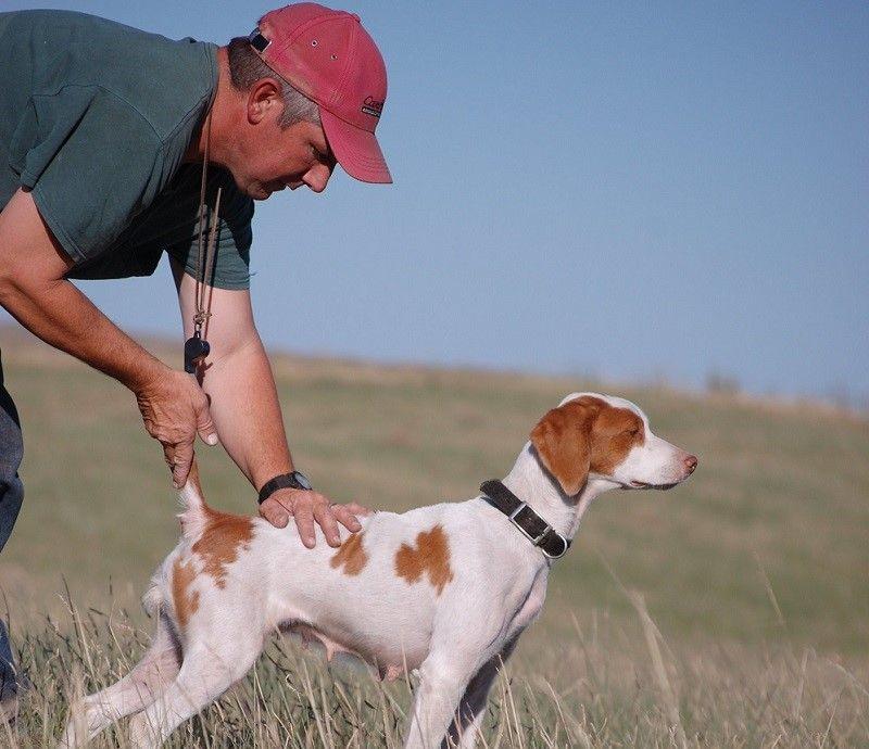 El entrenamiento de un perro para una caza
