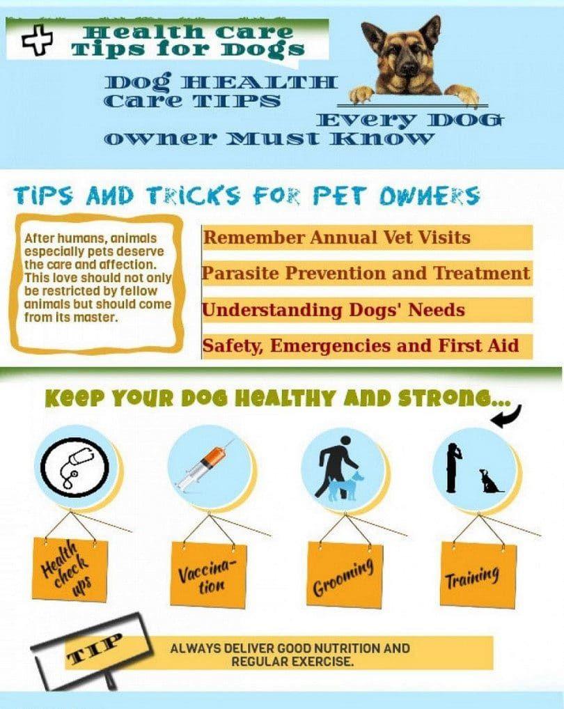 cuidado de la salud del perro
