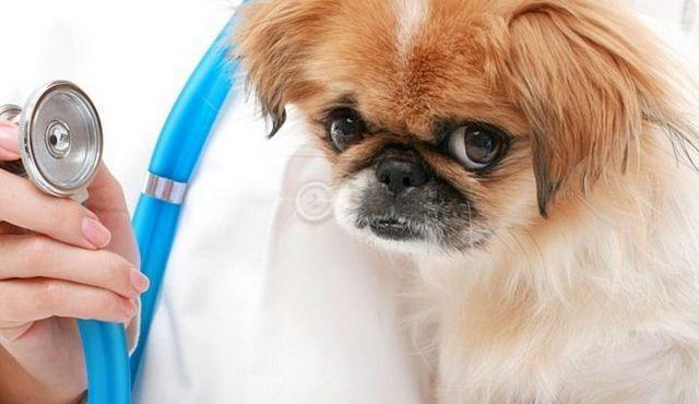 Tengo un cachorro enfermo! ¿Qué hago (o deje de hacer)?