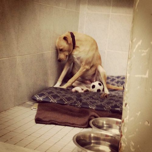 Si tu no`t Believe Dogs Have Feelings, Look At These Photos