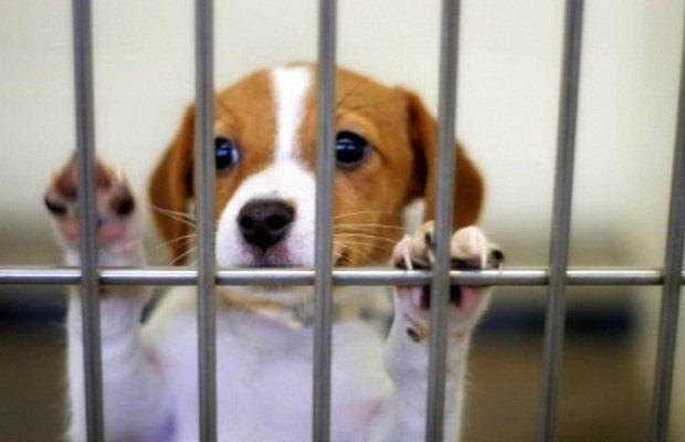 Los legisladores de Illinois considerando nuevas reglas para Tiendas de mascotas para ayudar a detener los molinos del perrito