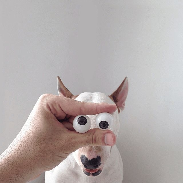 eyeballdog