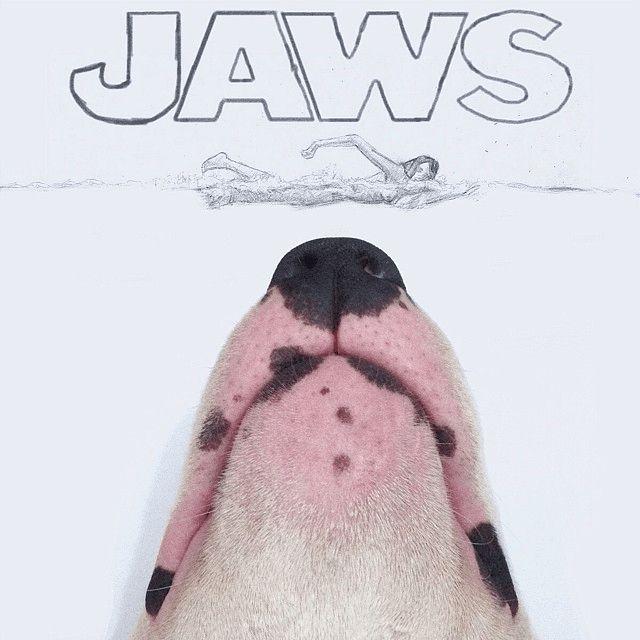 mandíbulas de perros