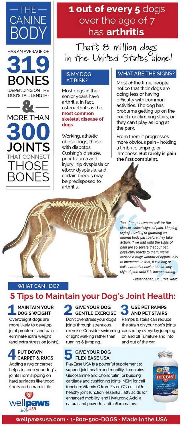 Infografía: el cuidado de las articulaciones de su perro
