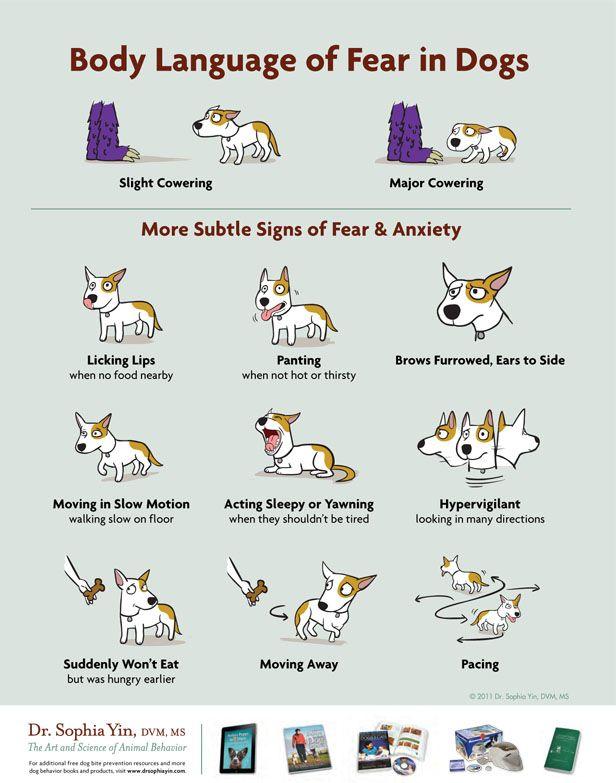 Infografía: el lenguaje corporal de miedo en los perros